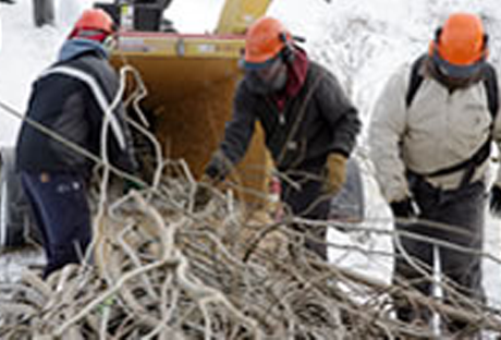 men-in-hard-hats-picking-up-tree-branches